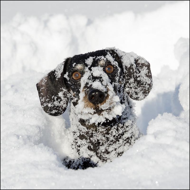 tek-neige-12