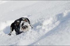 tek-neige-10_