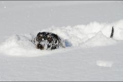 tek-neige-11