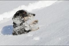 tek-neige-7