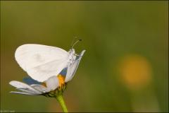 pap-blanc-1