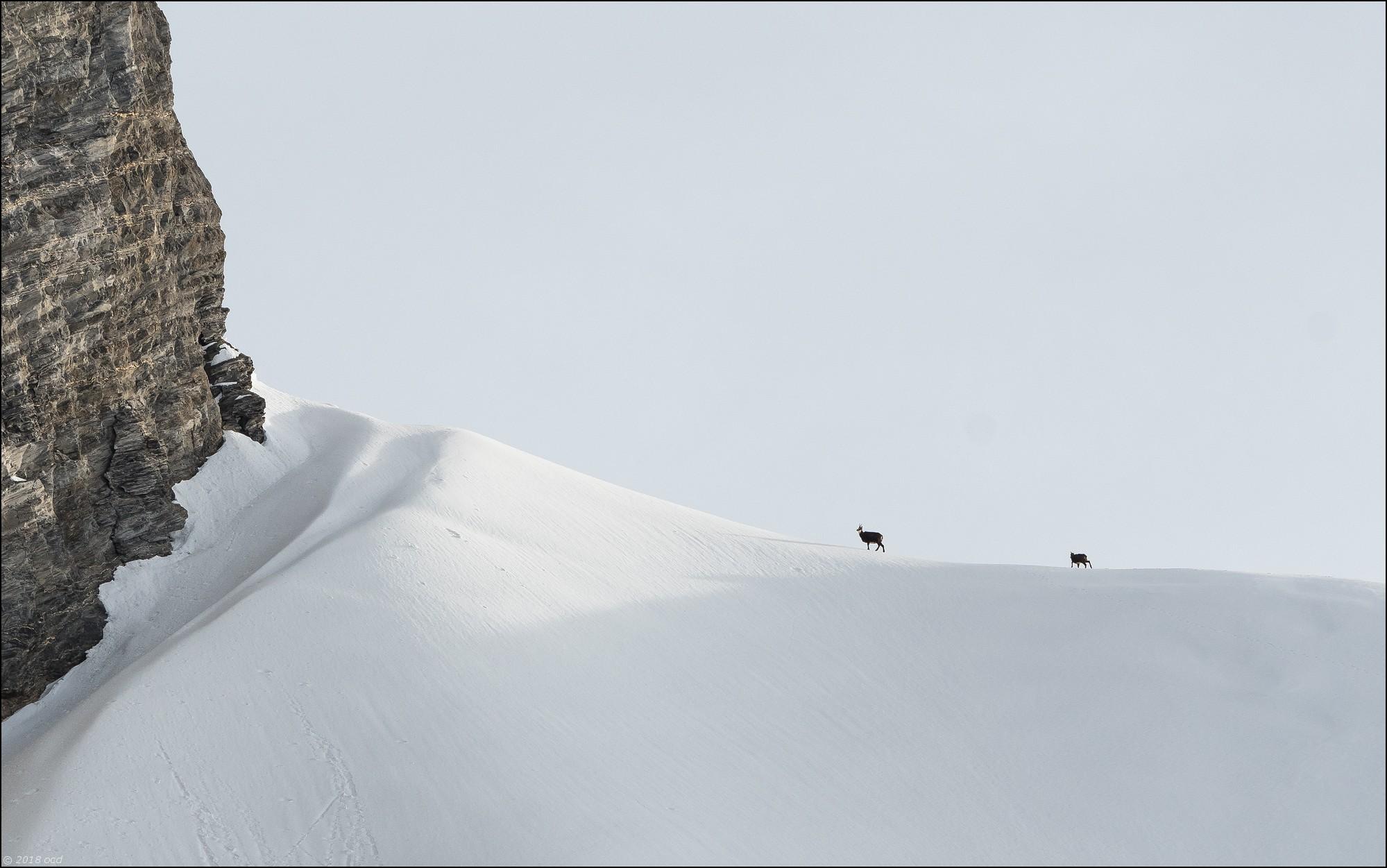 chamois-2018-janvier