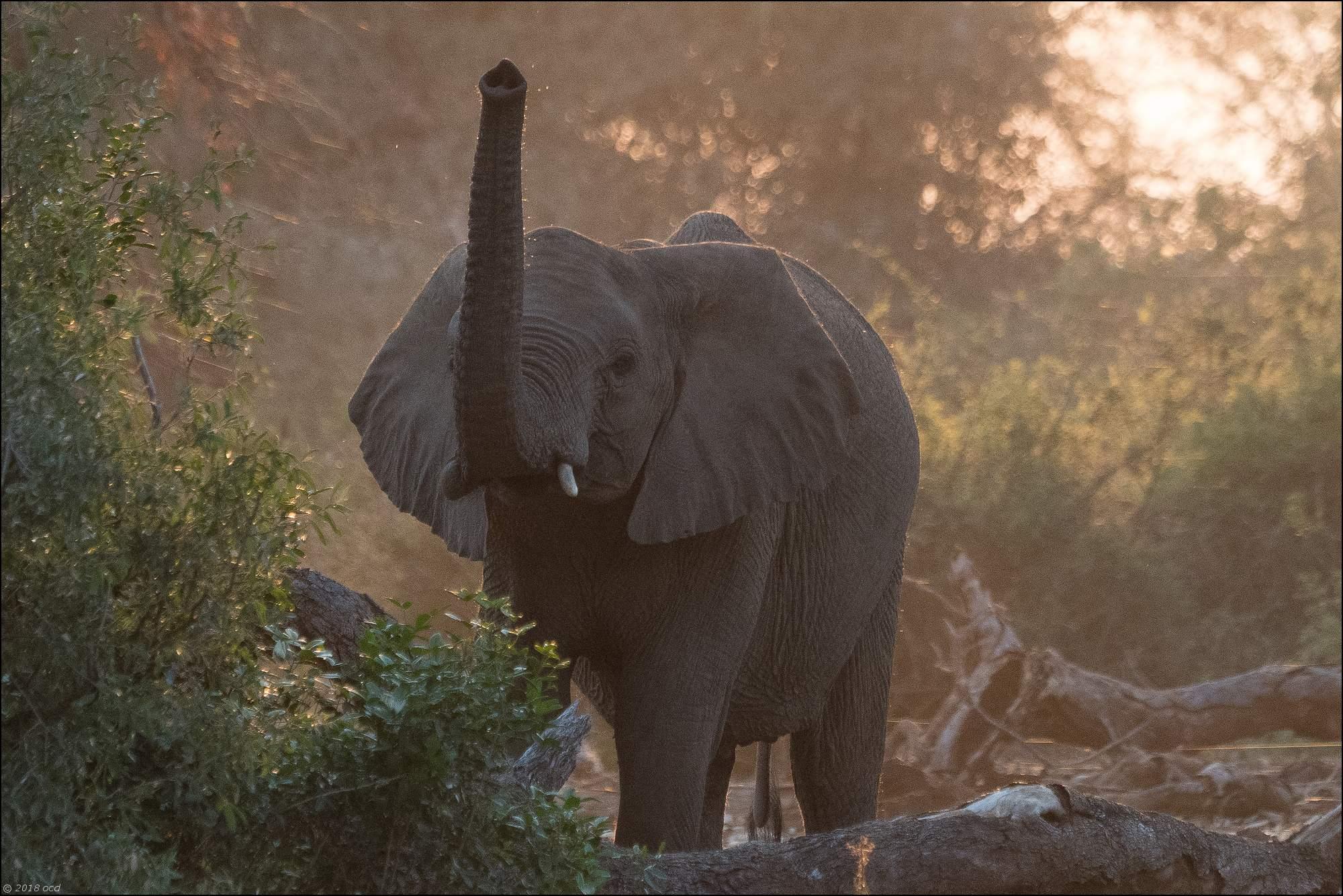 éléphant-contre-jour