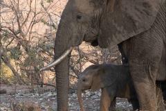éléphant-et-jeune