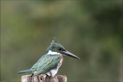 matin-pantanal