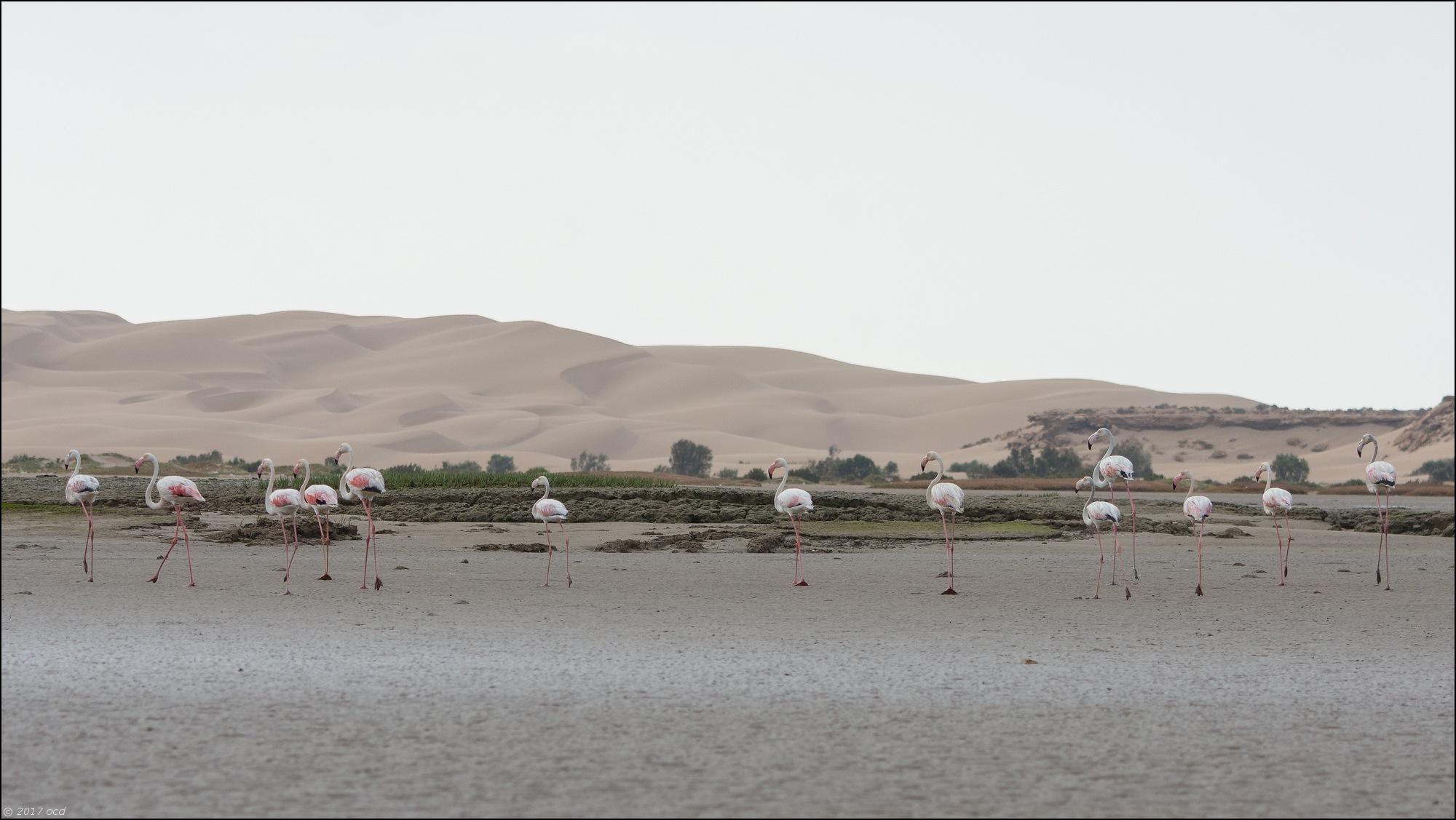 flamandrose-maroc-un