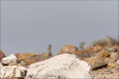 maroc-ecureil-deux