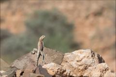 marocagame-quatre