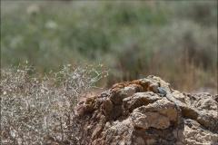 marocagame-trois