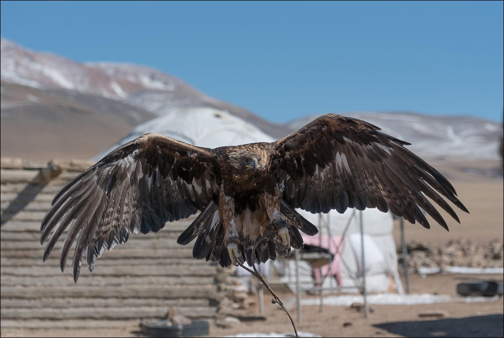 Mongolie-2017-11