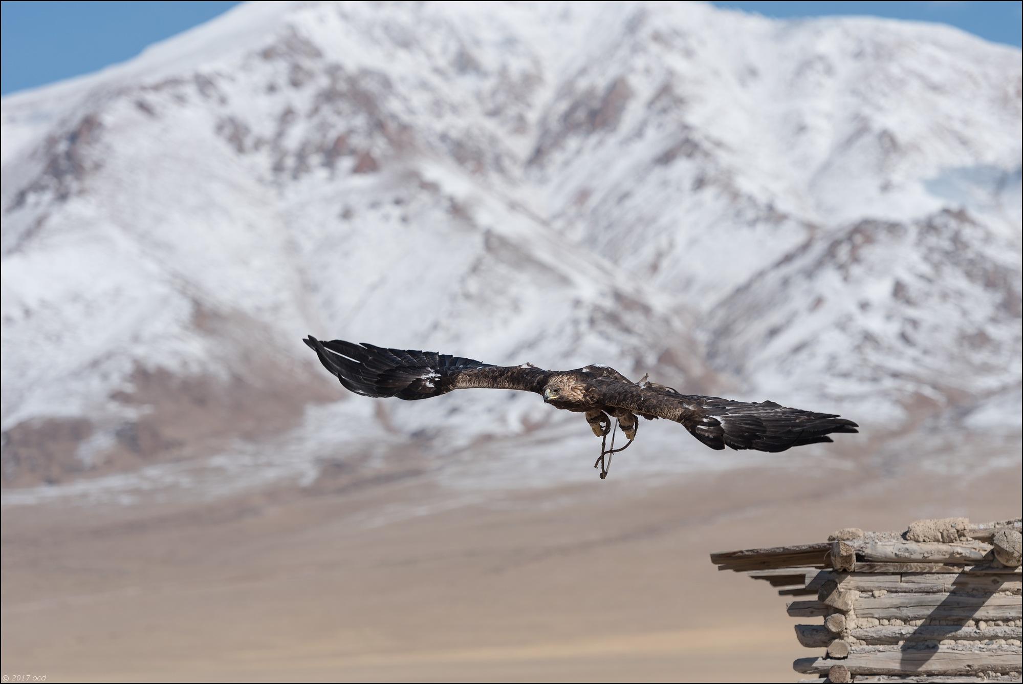 Mongolie-2017-13