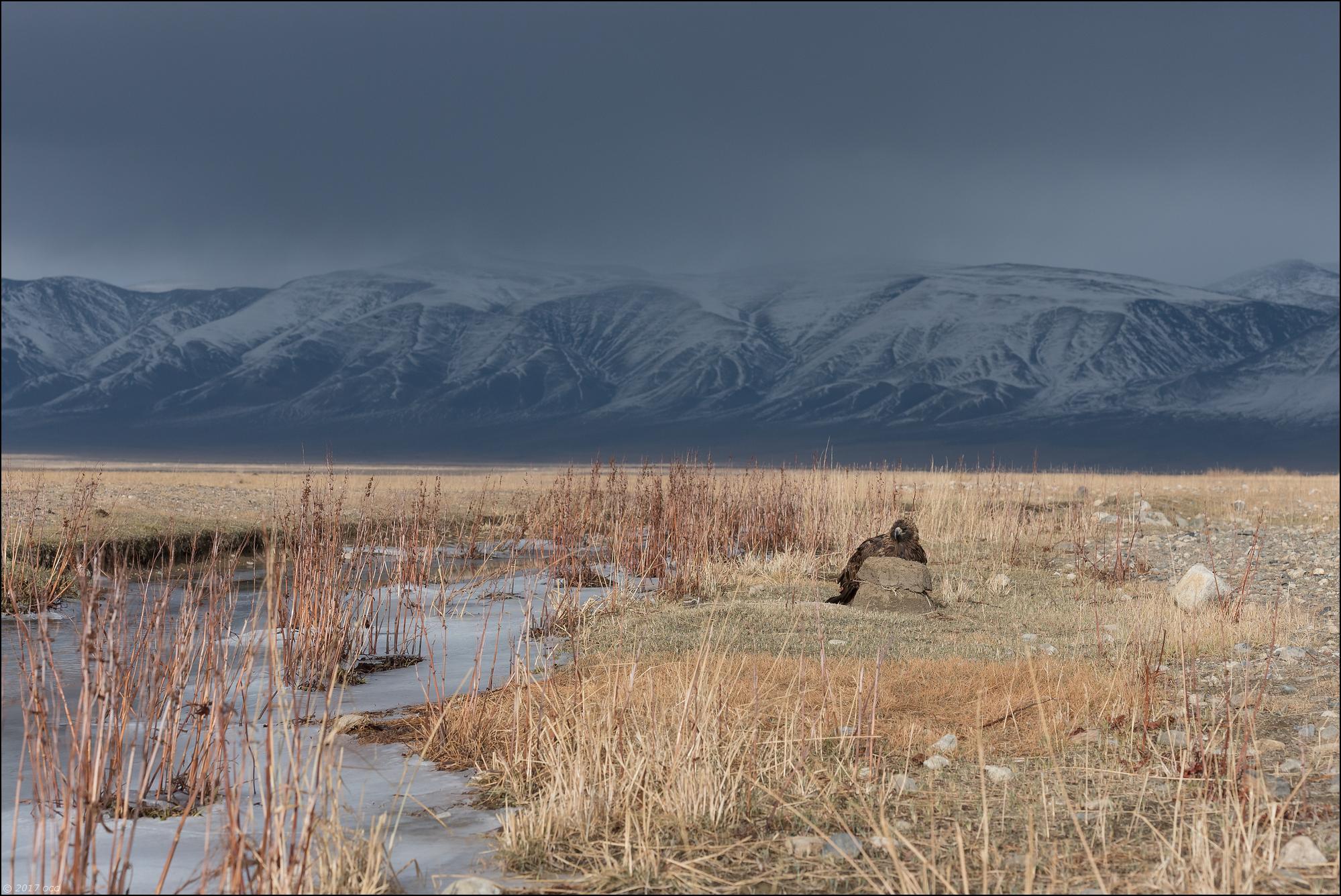 Mongolie-2017-38