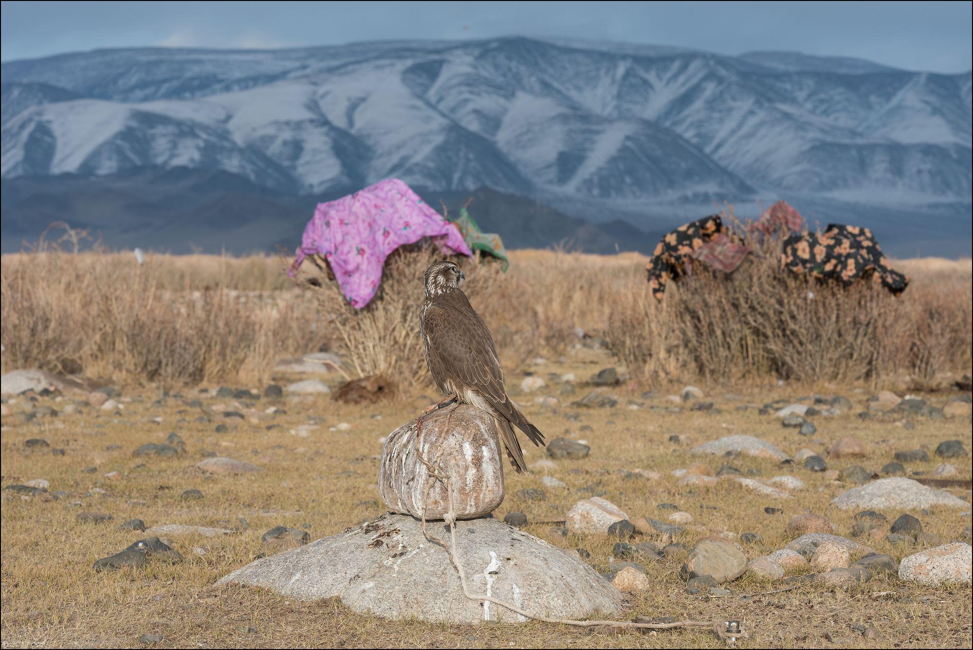 Mongolie-2017-42