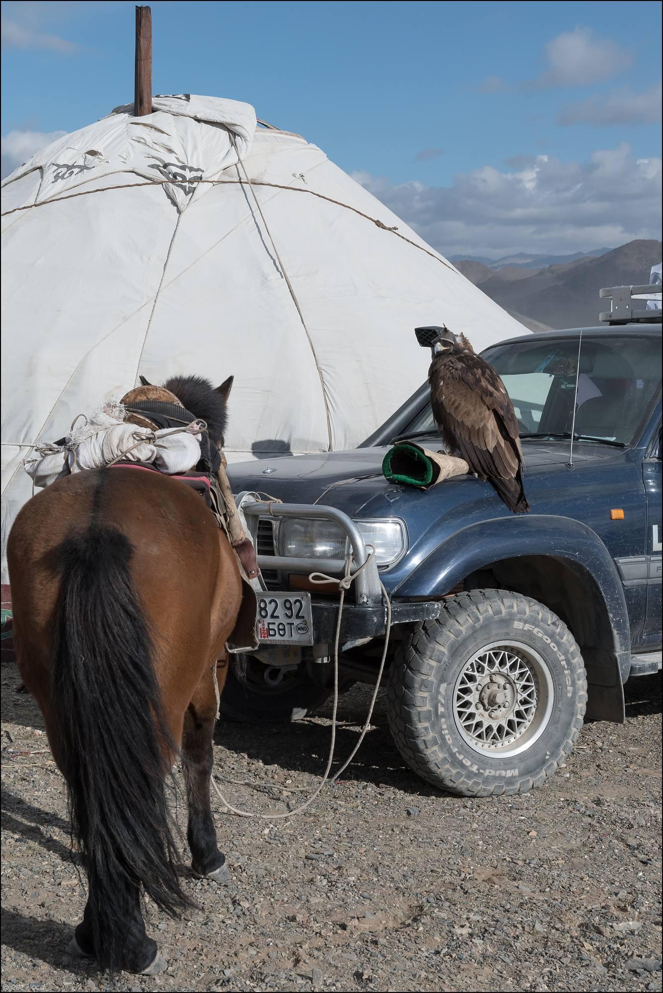 Mongolie-festival-dixneuf