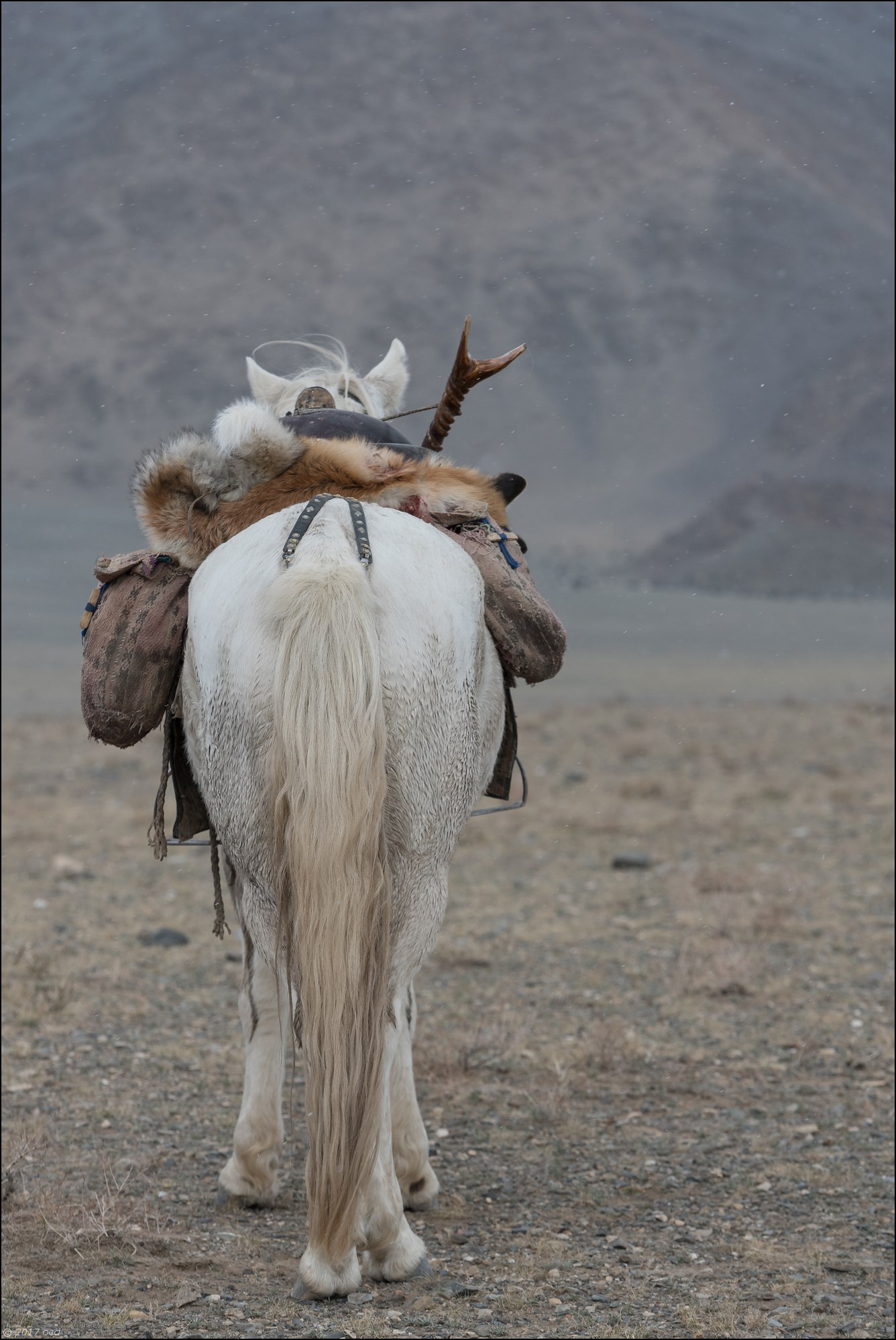 Mongolie-festival-quinze