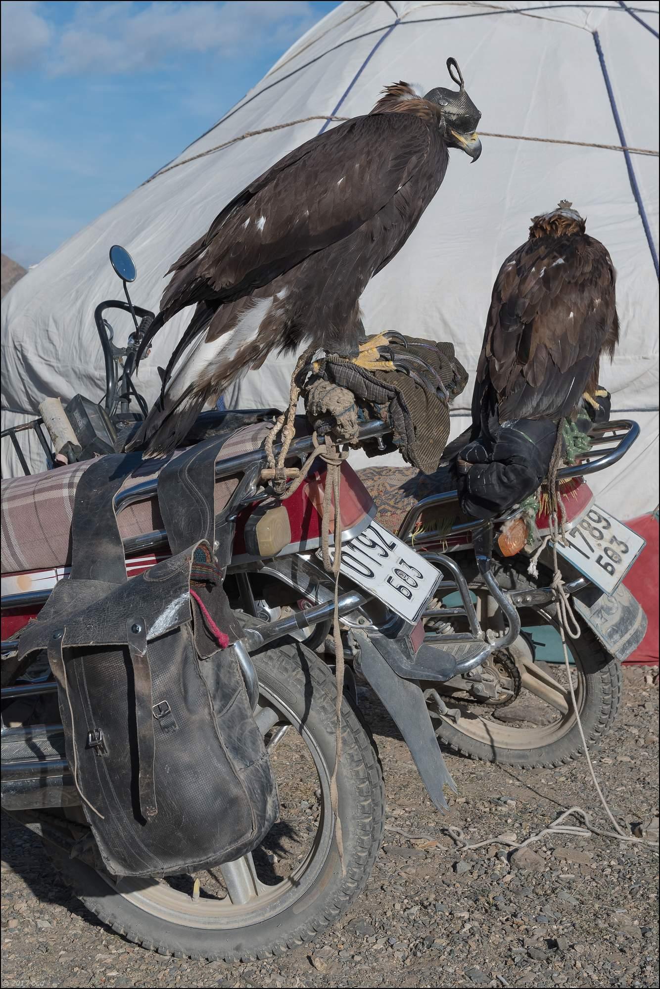 Mongolie-festival. dixhuit