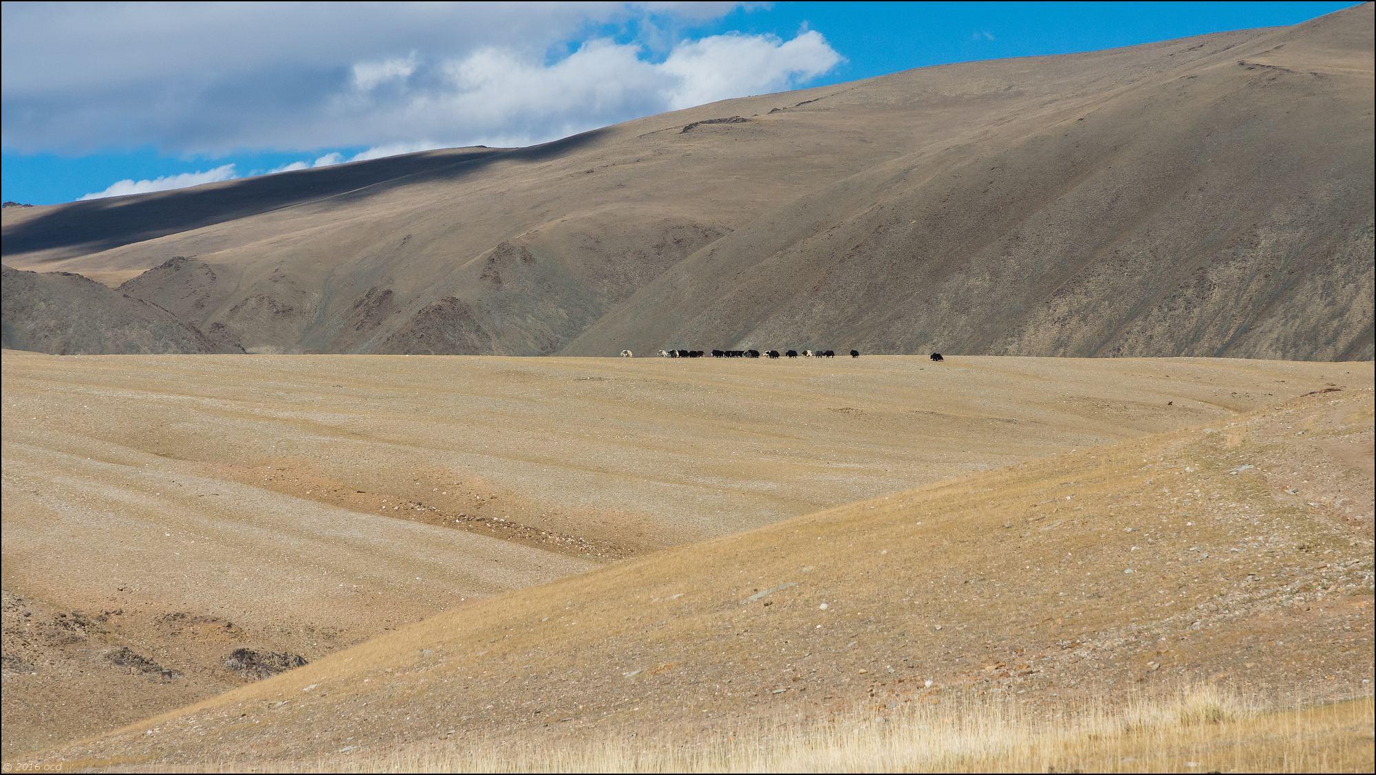 Mongolie-2016-paysage-six