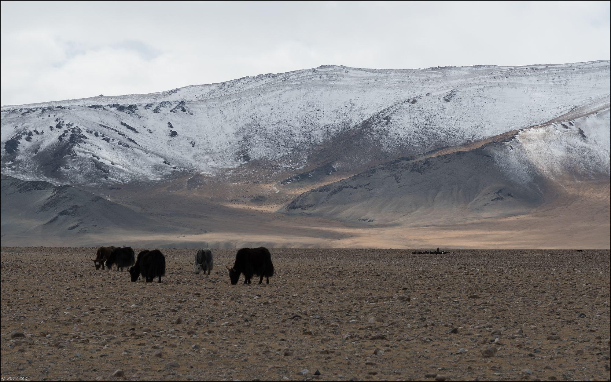 Mongolie-paysage-neuf