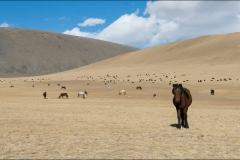 Mongolie-2016-paysage-sept