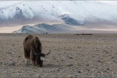 Mongolie-paysage-dix
