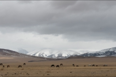 Mongolie-paysage-sept-2