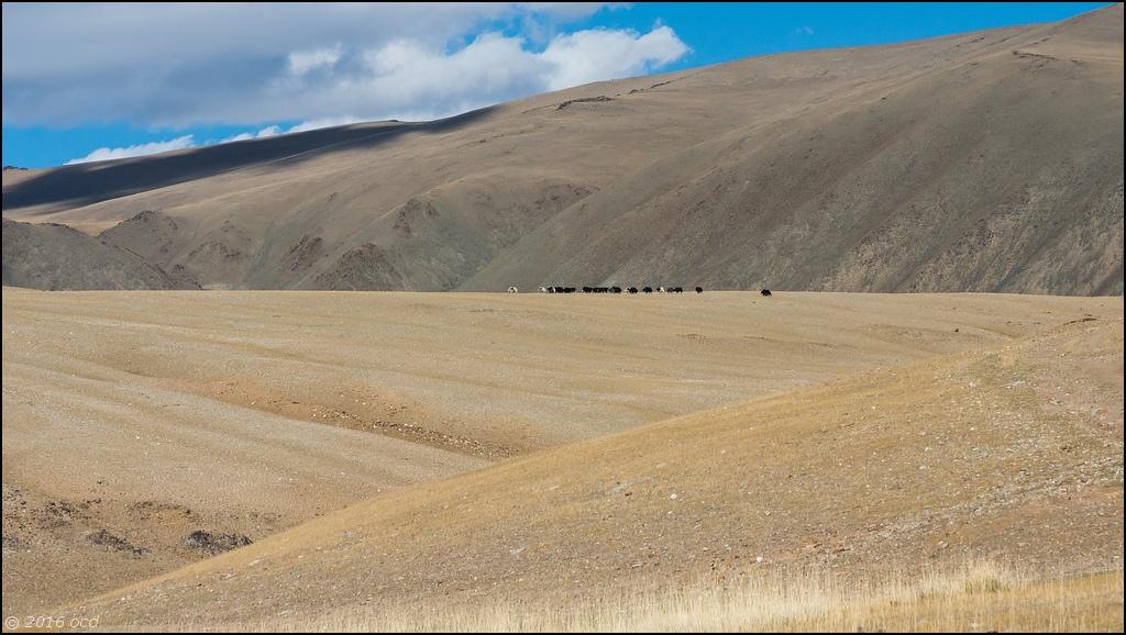 mong-paysage-4
