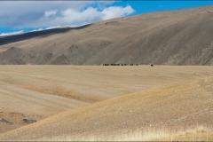 mongolie-2016-paysageyak