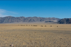 mongolie-paysage-2