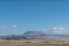 mongolie-paysage